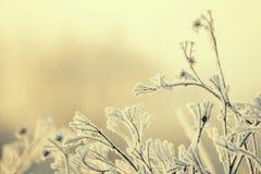 Lames d'herbe couvertes de gel Fond naturel saisonnier de bel hiver photographie stock libre de droits