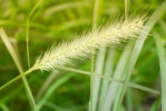 Lames d'herbe fines sous la lumière du soleil naturelle chaude donnant une nouvelle perspective sur la piscine réfléchie Cette ve Photos stock