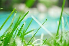 Lames d'herbe fines sous la lumière du soleil naturelle chaude donnant une nouvelle perspective sur la piscine réfléchie Cette ve Photos libres de droits