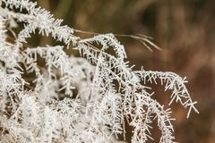Lames d'herbe glaciales Photos stock