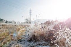 Lames d'herbe glaciales Photographie stock libre de droits