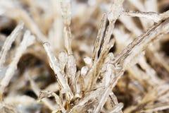Lames d'herbe glaciales un jour d'hiver Image libre de droits