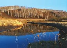 Lames d'herbe sèches sur un fond de la rivière images libres de droits