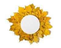 Lames d'isolement Frontière ronde de diverses feuilles d'automne d'isolement sur le blanc Photos libres de droits