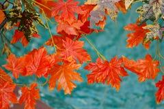 Lames d'orange d'automne Photos libres de droits