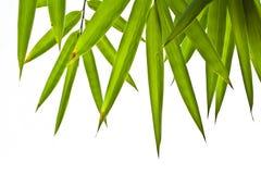 Lames de bambou Photo stock