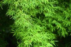 Lames de bambou Photo libre de droits
