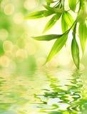 lames de bambou Photos stock