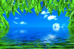 lames de bambou images stock