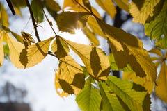 Lames de bout sur l'arbre Photographie stock
