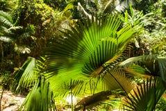 Lames de centrales tropicales Images libres de droits