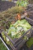 Lames de chou sur un segment de mémoire de compost Image stock