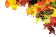 lames de coin d'automne photos libres de droits