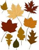 Lames de couleur d'automne Photo stock