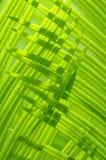 lames de feuillage en soleil Photos stock