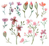 lames de fleurs réglées Photo stock