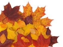 lames de fond d'automne Photographie stock libre de droits