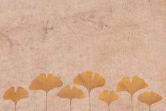 Lames de Ginkgo sur le fond de papier japonais Image libre de droits