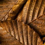 Lames de hêtre en automne Image libre de droits