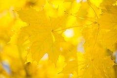 Lames de jaune Photographie stock libre de droits