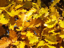 Lames de jaune Photo libre de droits
