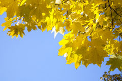 Lames de jaune d'automne Photo libre de droits