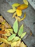 Lames de jaune d'automne sur un trottoir Images libres de droits