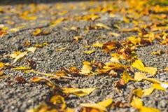 Lames de jaune Fond d'automne Fond de chute Photos stock