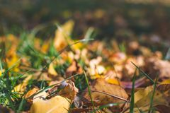 Lames de jaune Fond d'automne Fond de chute Images libres de droits