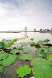 Lames de lotus sur le canal photo stock