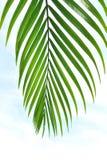 Lames de palmier photographie stock