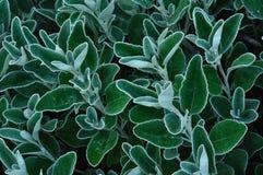 Lames de plante verte Photographie stock libre de droits