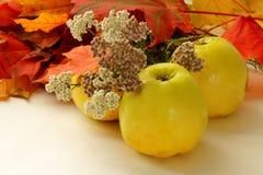 Lames de pommes, d'automne et fleurs Photos stock