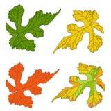 Lames de raisin Feuilles décoratives de vigne d'automne peintes dans différent illustration stock
