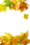 lames de trame d'automne Image libre de droits