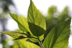 Lames de vert à la lumière du soleil Images stock