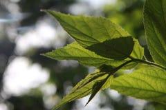 Lames de vert à la lumière du soleil Photo stock