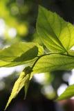 Lames de vert à la lumière du soleil Photographie stock libre de droits