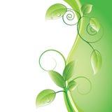 Lames de vert Photos stock