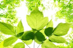 Lames de vert Image libre de droits