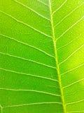 lames de vert Photo libre de droits