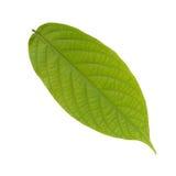 lames de vert Images stock