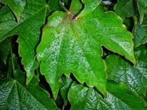 lames de vert Photo stock