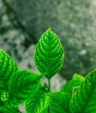 lames de vert images libres de droits