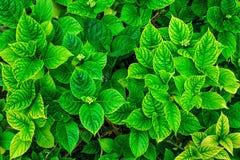 lames de vert Photographie stock libre de droits