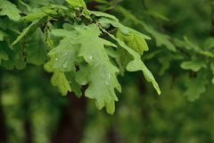 Lames de vert après la pluie Image stock