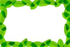 Lames de vert autour du fond blanc Photos libres de droits