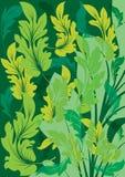 Lames de vert d'été illustration stock