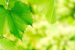 lames de vert d'environnement Images stock