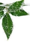 Lames de vert dans l'eau Images stock